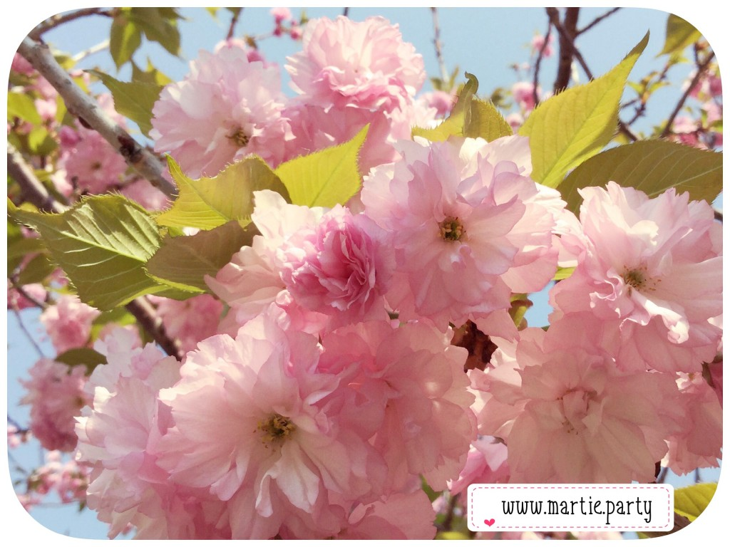 Bunches of pink flowers grow from a sunlit tree.