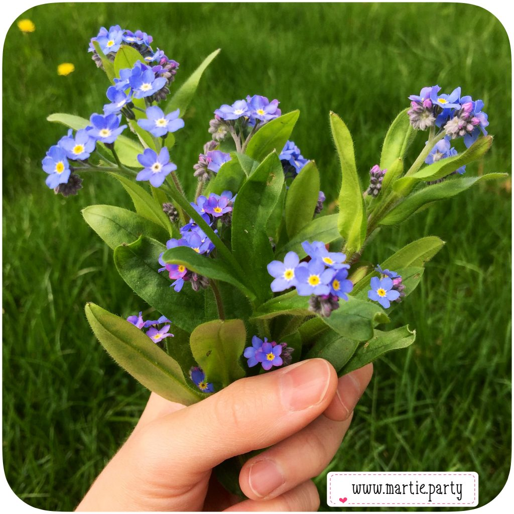A picked bunch of forget-me-nots.